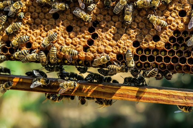 včelí vosk.jpg