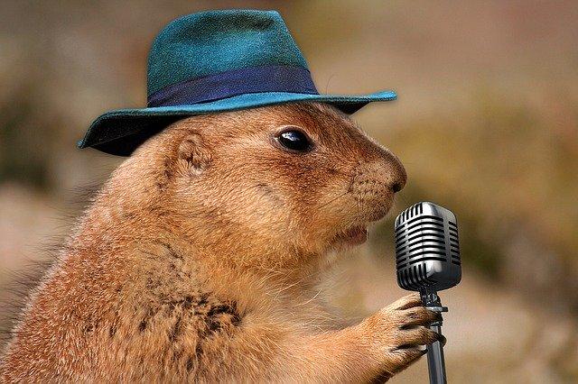 hlodavec u mikrofonu